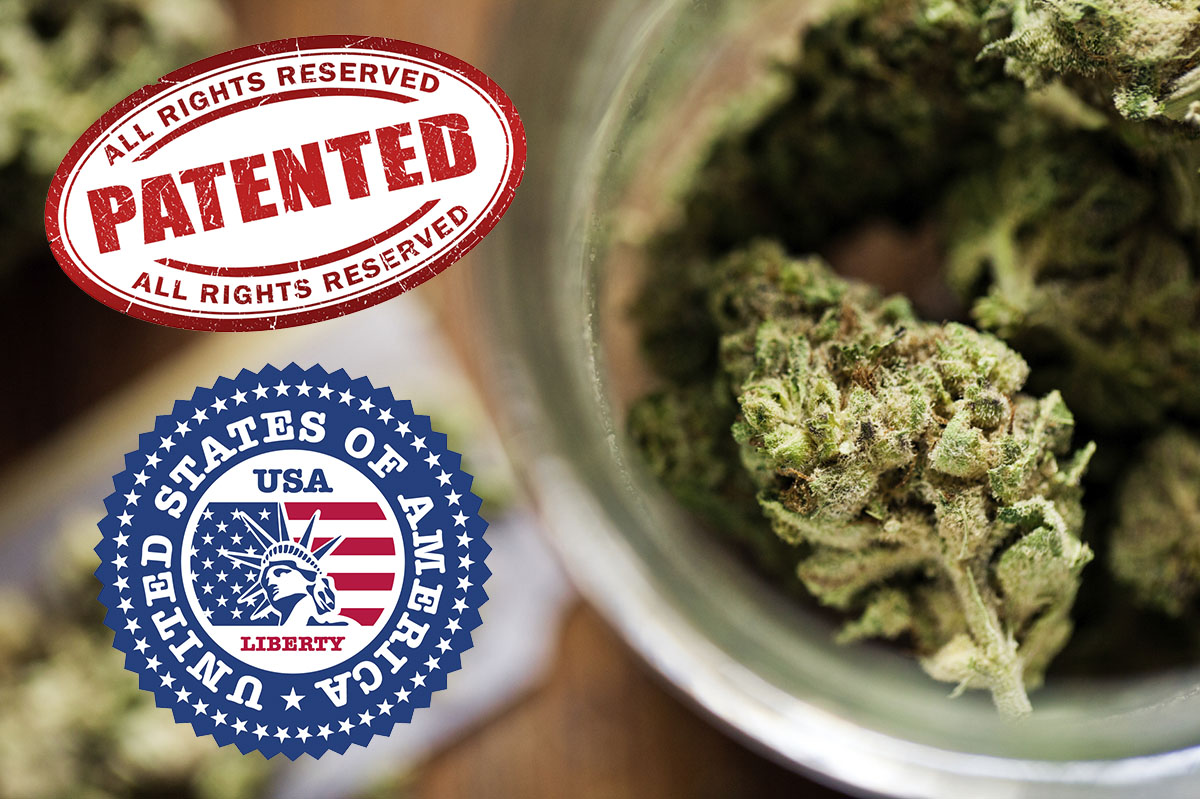 If The Federal Government Says Marijuana Has No Medical Value, Why Does it …