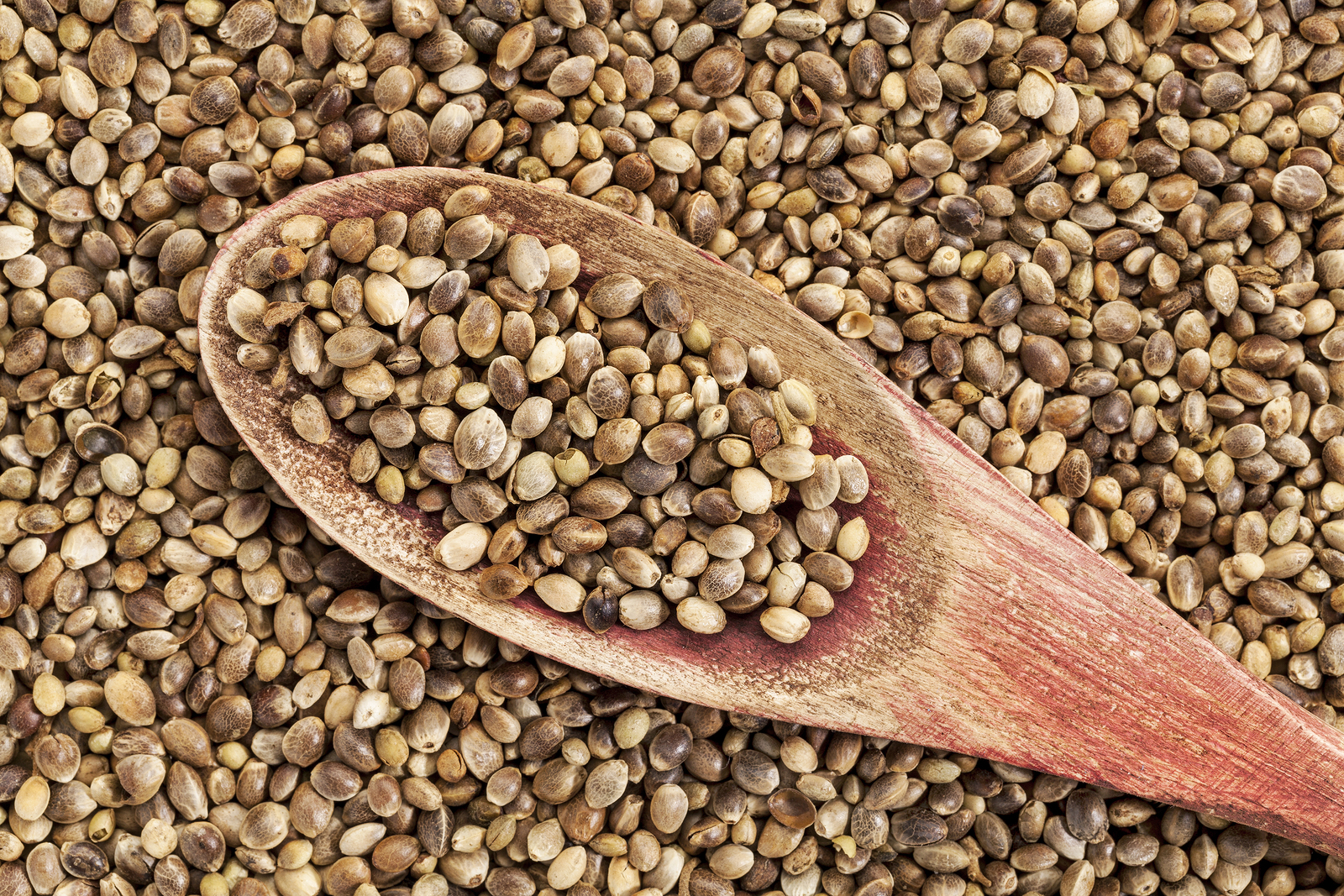 Laguna Blends Proves that Hemp Seeds are Not Just Another Health Fad